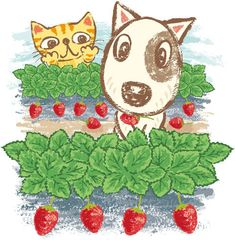 A Bull Terrier and a cat eating strawberries. Illustration by Toru Sanogawa