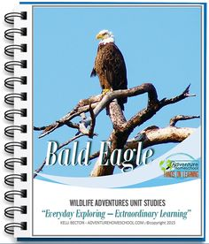 Bald Eagles Unit Study USE CODE: BESTHSDEALS to save $3 on top of SALE price #homeschool #kbnmoms