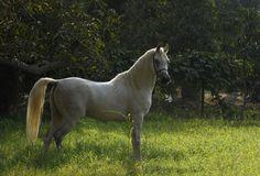 Arabian Beauty 6 by Mohamed  Abdo on 500px