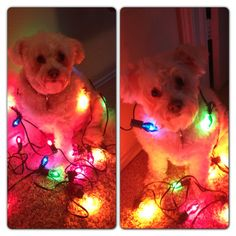 If Zoey doesn't eat the lights lol