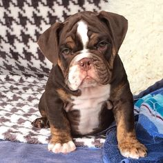 Photo taken by @exoticbullies808 on Instagram, pinned via the InstaPin iOS App! (11/10/2014)