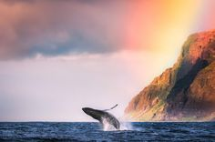 Whale-animal-ocean-sea-water-beach-mountains-nat.jpg (640×425)