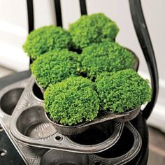 Recycle old muffin tins.
