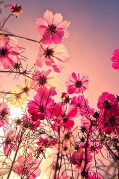 Pretty in pink flowers Ocean Wallpaper, Pink Wallpaper Iphone, Girl Wallpaper, Nature Wallpaper, Beautiful Wallpaper, Spring Flowers Wallpaper, Flower Wallpaper, Pink Nature, Flowers Nature