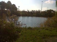 Pond at Conestoga College, Kitchener ON