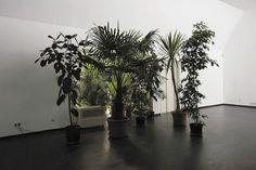 """""""Coppice (various plants causing a detour)"""" 2007 ~ Mandla Reuter"""