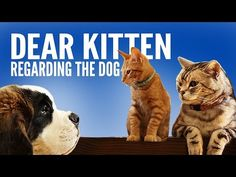 """The """"Dear Kitten"""" commercials are seriously hilarious! Regardless of what you think of cats or Friskies, they are worth watching! Funny Cats And Dogs, Cats And Kittens, Funny Animals, Cute Animals, Kitty Cats, Kitten Gif, Cat Gif, Kitten Videos, Getting A Puppy"""
