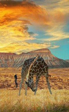 Giraffe.     ❥ڿڰۣ-- It's time to get inspired.