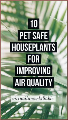 (paid link) What large plants are safe for cats? #catsafehouseplants