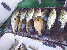 At Houghton Lake Best Fishing Days, Fishing Times, Houghton Lake, Ice Fishing, Childhood, Father, Teen, Memories, Places