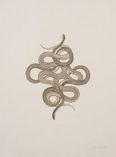 Julie Speed, Falling snakes Not into snakes but thought this would make for a gnarly tattoo