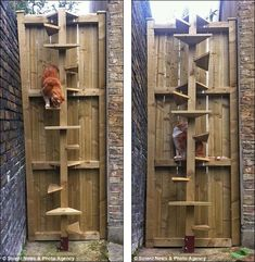 """Outdoor cat tree (but would use on an enclosed """"catio,"""" not so that they can roam the neighborhood and get in trouble."""