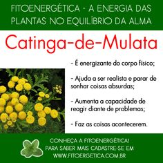 Catinga-de-Mulata Plant Health, Back Gardens, Herbal Tea, Wicca, Reiki, Healthy Life, Herbalism, Life Hacks, Spirituality