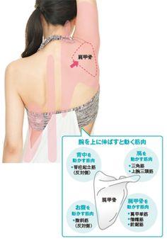 肩甲骨を寄せれば「たるみ」は消える:日経ウーマンオンライン【日経ヘルス8月号】