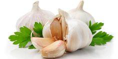 Knoflook is gezond en zo maak je ze op de juiste manier klaar Knoflook bevat allicine zorgt ook voor de specifieke geur en smaak van knoflook. Allicine wordt door je lichaam weer omgezet in sulfienzuur, wat de gezonde werking teweegbrengt. Allicine werkt weerstandverhogend en gaat infecties en schimmels tegen. Ook heeft knoflook een bloeddruk- en... - http://gezondheidenvoeding.nl/voeding/knoflook-is-gezond-en-zo-maak-je-ze-op-de-juiste-manier-klaar/
