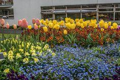 Botanic Gardens - Dublin   #Gardens #Park #Flowers