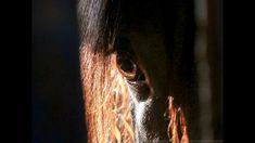 2016 Black gelding (short clip) Youtube, Teaser, Horses, Instagram, Black, Black People, Horse