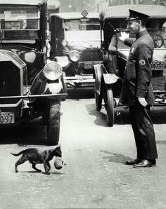 A New York City policeman stops traffic for a mother cat to carry one of her kittens across the street, Pictures in History I Love Cats, Cute Cats, Funny Cats, Funny Animals, Cute Animals, Animal Memes, Baby Animals, Crazy Cat Lady, Crazy Cats