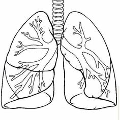 Best Coloring: Printable coloring pages of lungs - Amazing Coloring sheets - Human Body Science, Human Body Unit, Human Body Systems, Science Activities, Science Projects, Art Projects, Printable Coloring Pages, Science And Nature, Embroidery Art