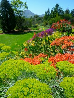 South African Garden, Leaning Pine Arboretum, Cal Poly | Flickr - Photo Sharing!