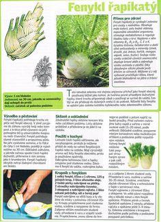 - Dieta Detox, Herbs, Entertainment, Gardening, Health, Sweet, Fitness, Food, Belle