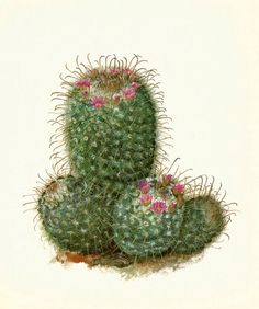 Hey, I found this really awesome Etsy listing at https://www.etsy.com/listing/204888938/gorgeous-antique-cactus-print-silken