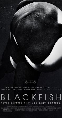 "Directed by Gabriela Cowperthwaite.  With Tilikum, Dave Duffus, Samantha Berg, Dean Gomersall. A documentary following the controversial captivity of killer whales, and its dangers for both humans and whales. ""LOVED it!"""