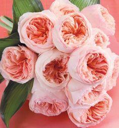 Juliet (Ausjameson) Roses