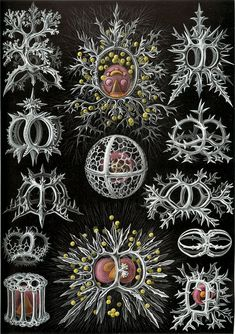 Items similar to Vintage Print Natural History Art Print: Ernst Haeckel Scientific Illustration Art Print on Etsy Arte Coral, Coral Art, Ernst Haeckel Art, Natural Form Art, Historia Natural, Nautical Art, Sea Art, Art Plastique, Marine Life