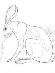 Image result for how to draw hares