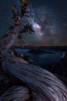 An ancient tree overlooks Crater Lake at night. By far my favorite stop on a recent motorcycle/camping trip throughout Oregon [OC] [799x1200]   landscape Nature Photos