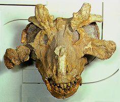Permian therapsid Estemmenosuchus mirabilis