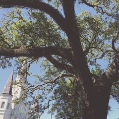 #jacksonsquare #stlouiscathedral #NOLA #frenchquarter #outside #shade #liveoak #trees #blue #green #white #beautifulday #louisiana by meagan_michelle