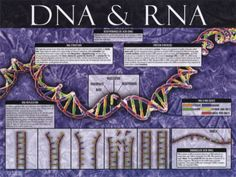 Biology posters and art prints