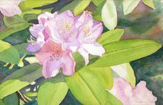 Rhododendron art watercolor painting print from an original by Evalene Tarr, floral, spring flowers, pink, purple, blue, green