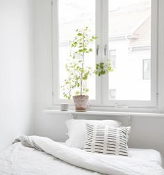 What a great white bedroom and love the elegant and simple plant.