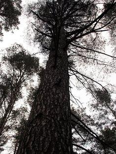 FOREST, Suleczyno, Poland