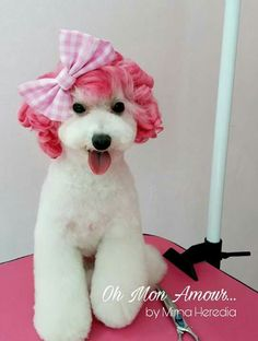 69 best images about Asian Fusion/Japanese Dog Grooming Styles, Poodle Grooming, Pet Grooming, Grooming Salon, Cute Baby Dogs, Cute Puppies, Extreme Pets, Poodle Cuts, Creative Grooming