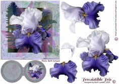 Irresistible Iris on Craftsuprint designed by Bodil Lundahl - An absolutely stunning Iris, which I should love to be able to grow in my own garden. The flower has four layers, which are not too difficult to cut out, plus a double tag for your own sentiment. If you like this particular Iris, try to see cup370425_1395 too