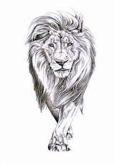 Lion Walking.... Freakin obsessed