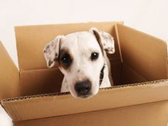 101 Things to Do with a Box - great site with things to keep thinker dogs thinking and out of trouble!  Might need some @Brew Bones tastey treats for rewards!