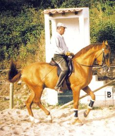 """""""It is necessary to have great skill in order to arrive at this equestrian plateau. However,if tact is lacking, all the skills in the world are useless."""" Nuno Oliveira"""