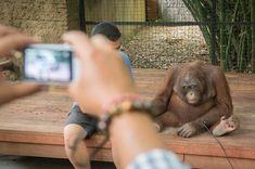 Animal Protector - World Animal Protection Australia Wildlife Tourism, World Animal Protection, Bali, Dolphin Teeth, Cat Fails, Elephant Ride, Bottlenose Dolphin, Animals Of The World, Orangutan