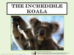 Price $4.00 The Incredible Koala from TiePlay Educational Resources LLC on TeachersNotebook.com (15+pages) The Incredible Koala comes with 38 task cards, key, 2 student game award cards, instructions for the teacher, links to printable koala information to use before or during task card use and more!