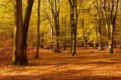 Exposure #Photography Tips In Autumn http://feedproxy.google.com/~r/EphotozineTechniques/~3/9RivLfuSVFk/exposure-photography-tips-in-autumn-25666?utm_content=bufferde630&utm_medium=social&utm_source=pinterest.com&utm_campaign=buffer