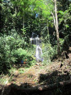 Ireneval Brownsberg #Suriname