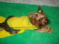 By Brasil