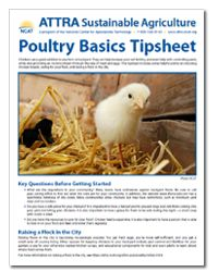 Poultry Basics Tipsheet Chickens are a great addition to any farm or backyard. They can help increase your soil fertility, and even help with controlling pests, while also providing an income stream through the sale of meat and eggs. This tipsheet includes some helpful points on choosing chicken breeds, caring for your flock, and raising a flock in the city.
