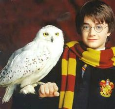 Hedwig and Harry Potter...