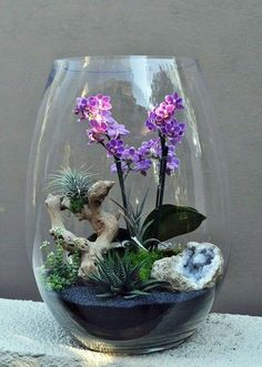 Orchideen-Luftpflanzen-Terrarium Best Picture For Cactus con flores For Your Taste You are looking for something, and it is going to tell you exactly what you are looking for, and you didn't find th. Orchid Flower Plant, Orchid Plants, Air Plants, Cactus Plants, Indoor Plants, Indoor Cactus, Flower Diy, Cactus Art, Terrariums Diy